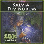 Salvia divinorum extracto 10x
