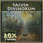 Salvia divinorum portada extracto 20x 1gr