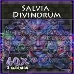 Salvia divinorum portada extracto 40x 3gr
